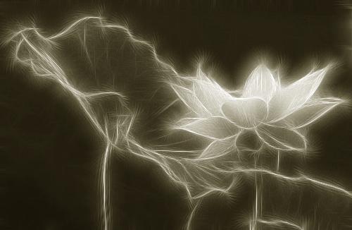Lotus Flower - Fractalius - IMGP7618-sha
