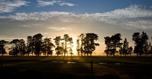 silhouette clouds sunrise geotagged otto vote tress geo:lat=34895611 ©toddnorbury geo:lon=150673177 onzfave