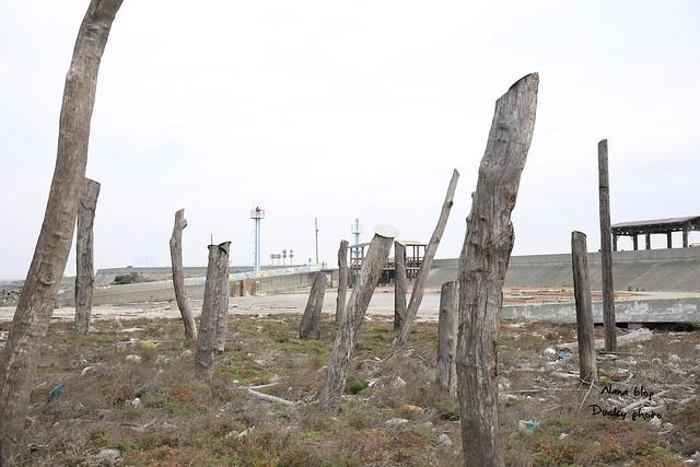 彰化福興-福寶濕地-漂流木公園 (10)