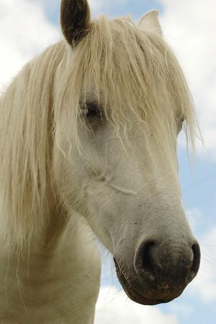 fluffy horses - photo #17