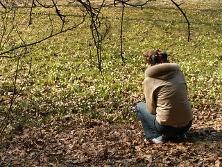 Naturfreundin und Märzenbecher, Leucojum vernum, aus der Familie der Amaryllisgewächse, Amaryllidaceae  auf der Märzenbecherwiese im Polenztal