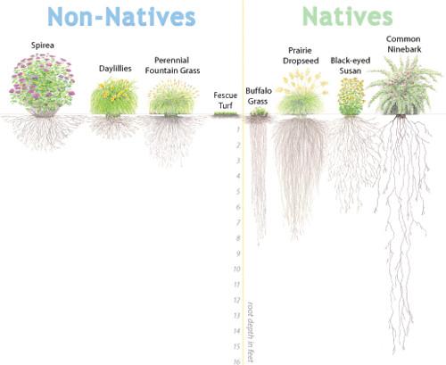 2517696906 54a21ce34d jpgPlant Roots Diagram