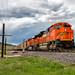Spruce Memory by Wheelnrail