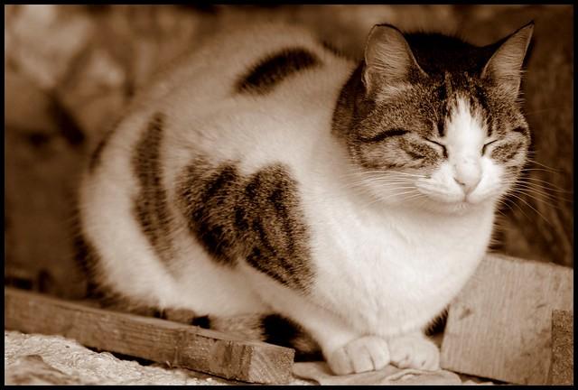 Free Roaming Cat Statistics Au