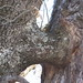 Oak / Pine weirdness