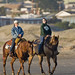 Horses and Riders on the wet sand beach in late evening light on Morro Strand