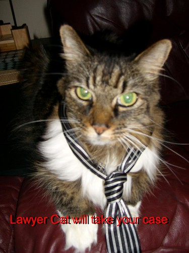 Lawyer Cat will take your case
