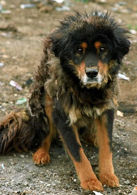 Paryang;The beaten dog | Flickr - Photo Sharing!