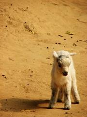 Zoo 新會動物園 2007 300+views