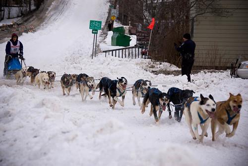 2300304440 6568d3f0e0 Sled Dogs #12   1