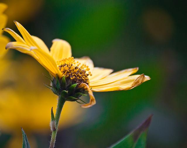 Una flor para este día.