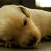 cachorro jato (¿te araño?) by Pam Mandujano