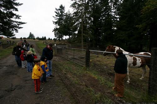 barnyard animal tour stops for a horse    MG 4387
