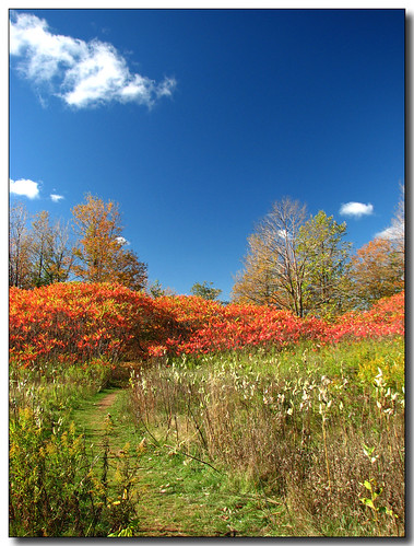 blue autumn red sky ontario canada green fall clouds landscape lisas sumac milkweed provincialpark allrightsreserved forksofthecredit caledon naturesfinest dec09 3234 superbmasterpiece diamondclassphotographer deco9 copyrightlisastokes gappool