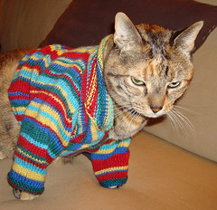 Cleo in Cat Sweater