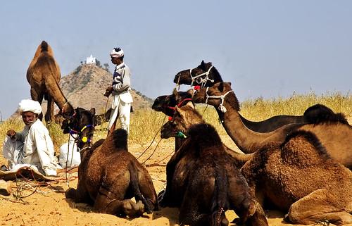The Legend of the Invisble Camel Whisperer !!