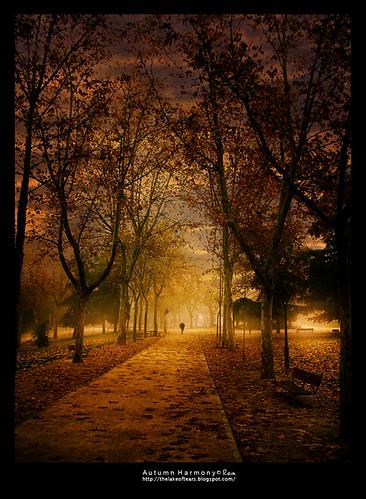 madrid road autumn sunset mist fog way sadness san solitude loneliness sundown camino path harmony otoño soledad emotional melancholy neblina isidro niebla melancolía bruma rainphotography luisflópez