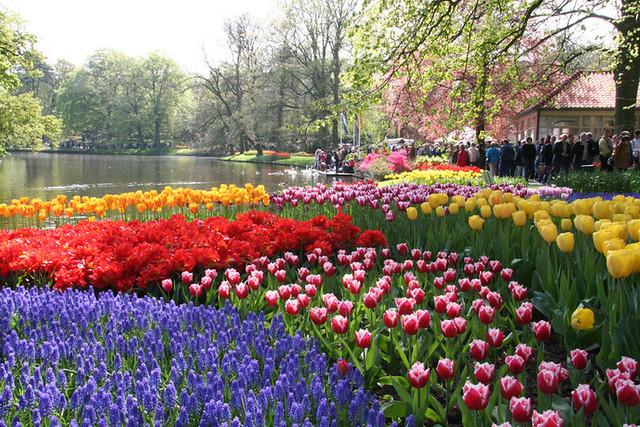 Amsterdam Keukenhof Tulip Farm Flickr Photo Sharing
