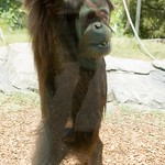 San Diego Zoo 012