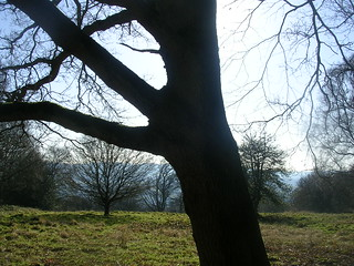 North Downs trees