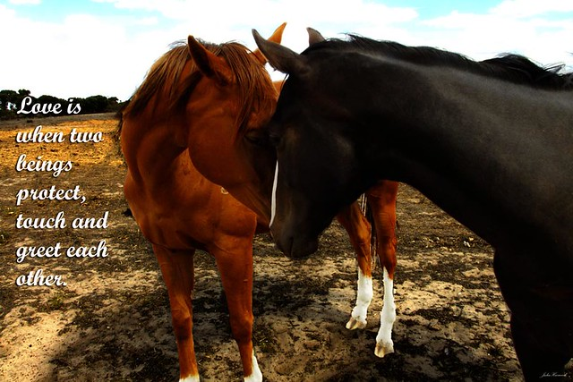 Horse love with quote | Flickr - Photo Sharing!