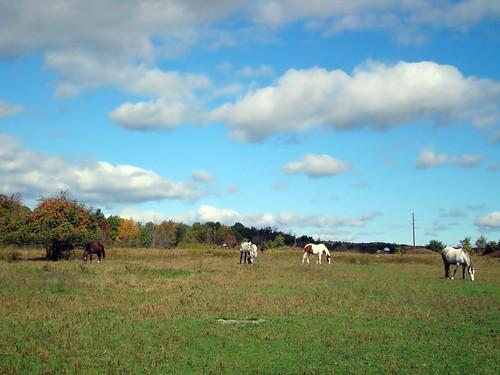 horses thefield october2007