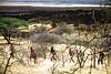 Serengeti11_400