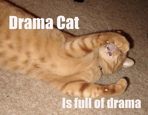 Drama Cat is Full of Drama