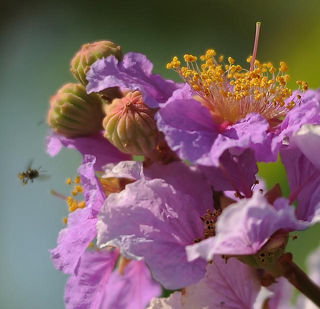 ~ Purple Blossom ~