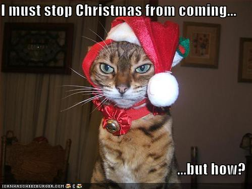 funny-pictures-cat-stops-christmas