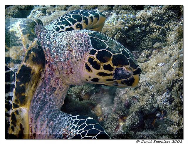 Turtle fish head 2 flickr photo sharing for Fish head app