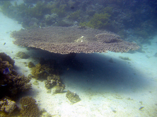 Table Coral - Gabr el Bint, Dahab
