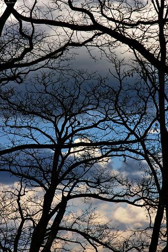 sky alberi nuvole geneve blu swiss cielo svizzera 2008 ginevra bobmarley contrasto riflessione citazione mywinners diamondclassphotographer jodyart theunforgettablepictures jodysticca goldstaraward