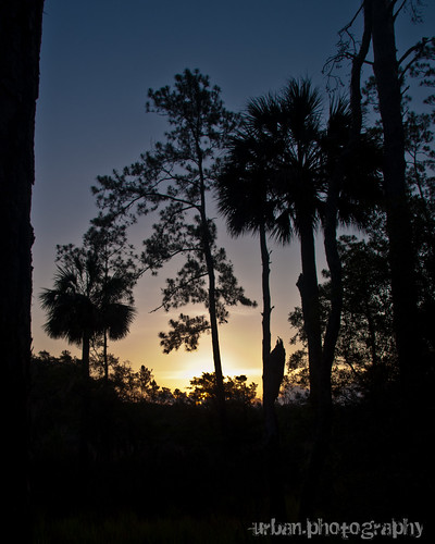 morning nature silhouette pine sunrise georgia palmtree skidawayislandstatepark sandpipertrail