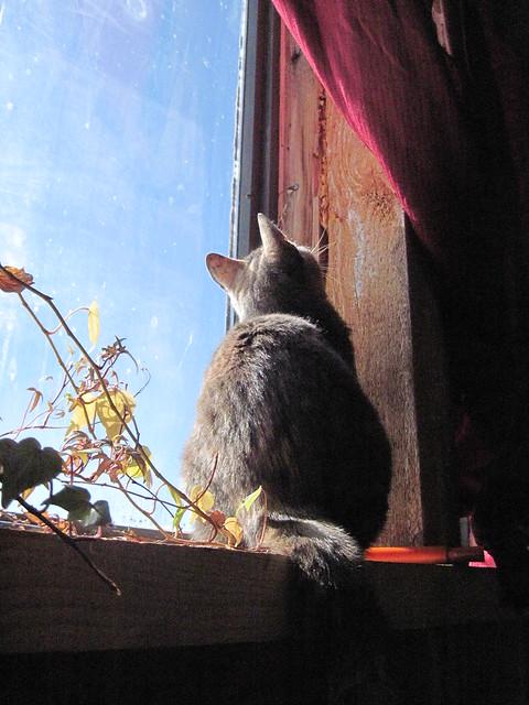 """Cat In The Window"""