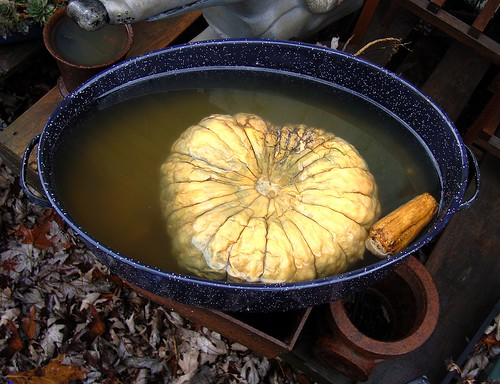 water pumpkin