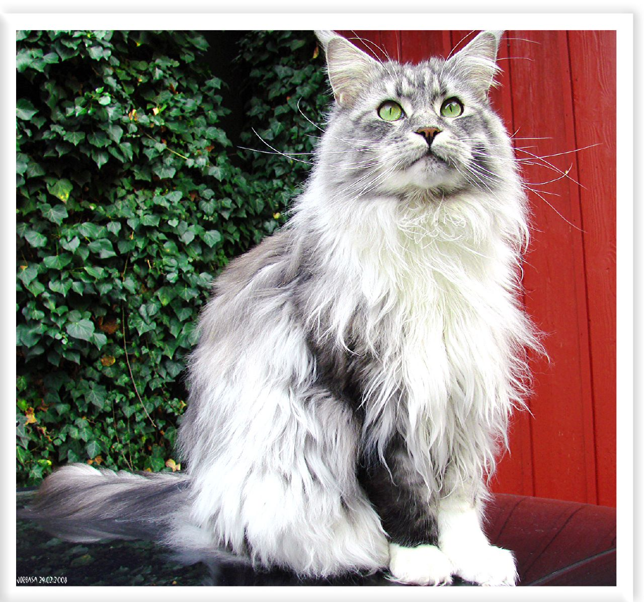 Patricia Teel s blog World s st Domestic Cat Breed