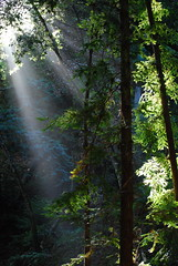 ray of light through the canopy