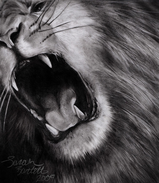 Lion Drawing | Flickr - Photo Sharing!
