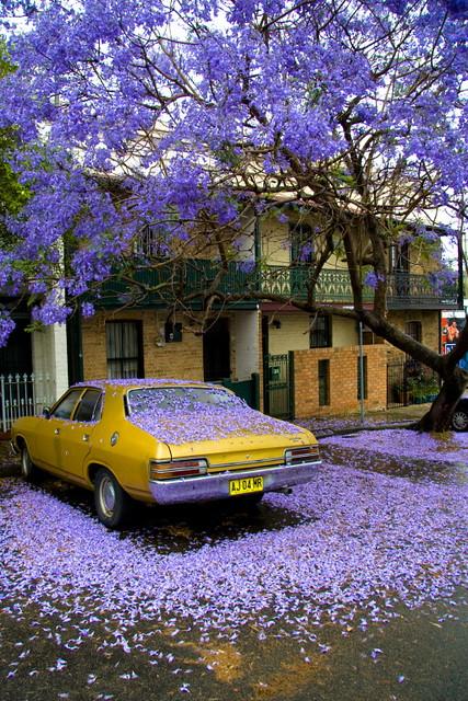 Sydney, Newtown