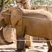San Diego Zoo 094