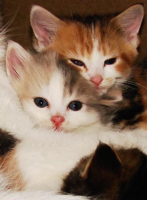 chatons-II