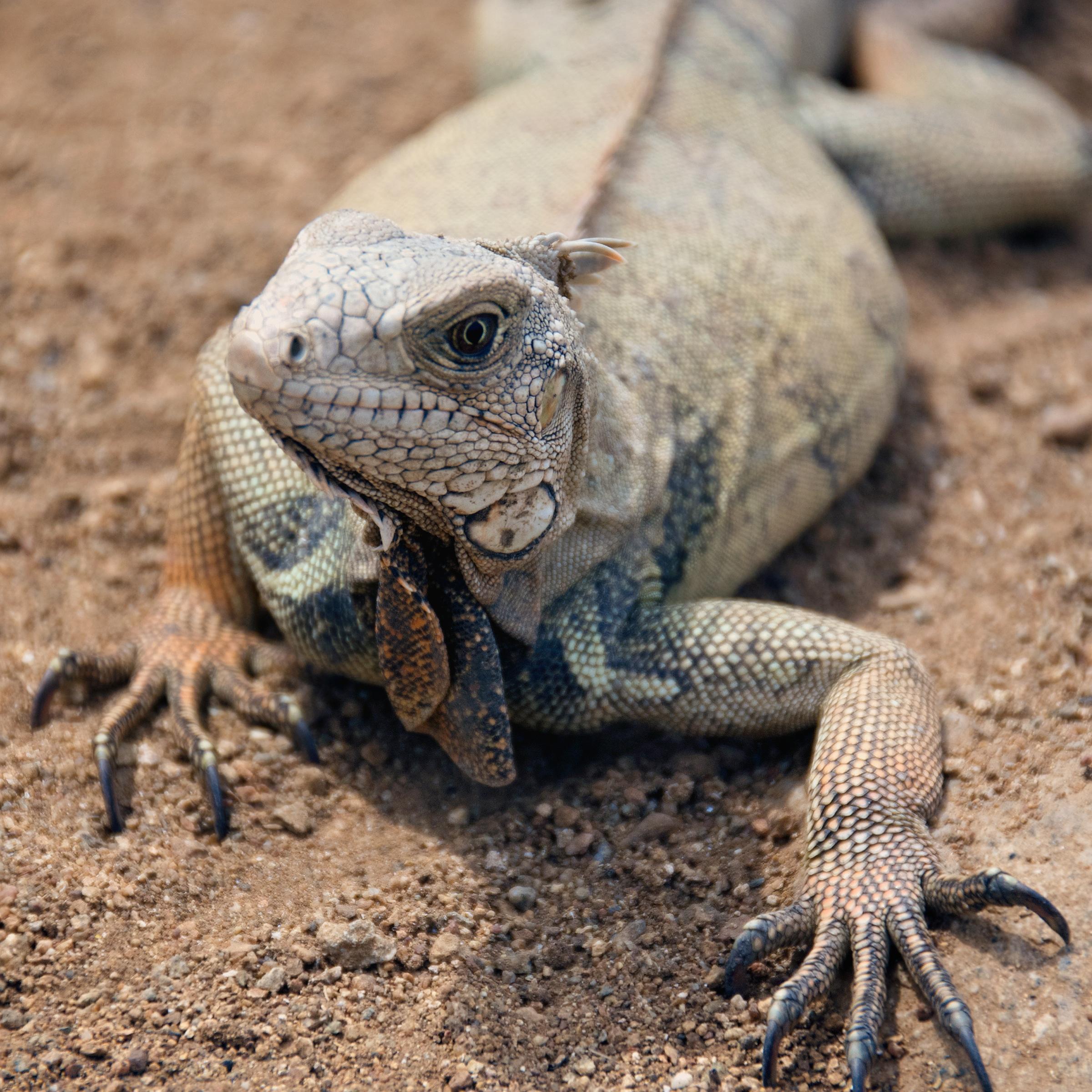 Gecko Change Color
