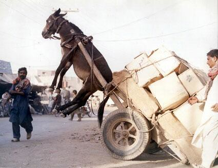 Information Overload Donkey