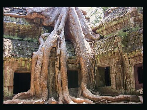 Angkor - Ta Phrom - Der Dschungel schlägt zurück (Vers.2),  7 v