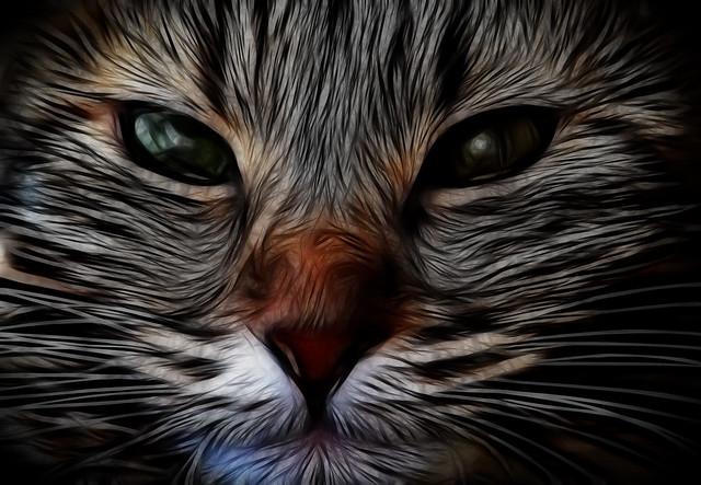 Fractalius Kitty Kitty