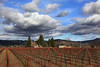 Napa vineyard by dmmaus