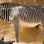 Los Angeles Zoo 031