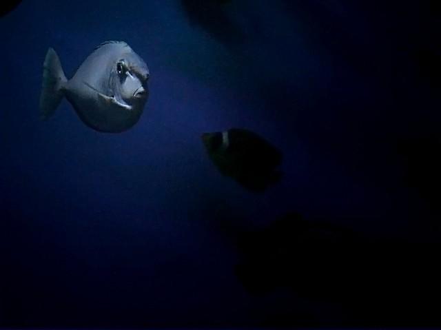 Finding Fisheye