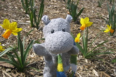 Tiptoeing Through the Daffodils
